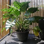 hardscape design ideas with potted plants