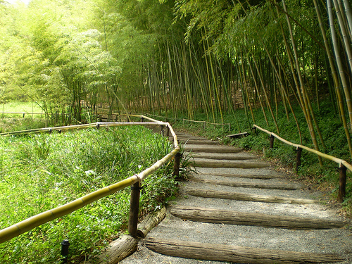 Great Bamboo Garden Pathway Design 500 x 375 · 216 kB · jpeg