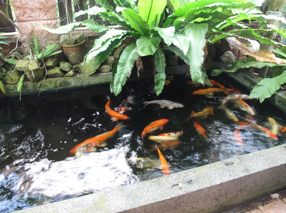 Beautiful koi fish pond design ideas home trendy for Koi pool dekor