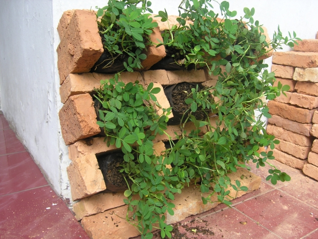 Amazing Vertical Garden Design Bricks 640 x 480 · 301 kB · jpeg