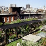 chicago roof garden design ideas