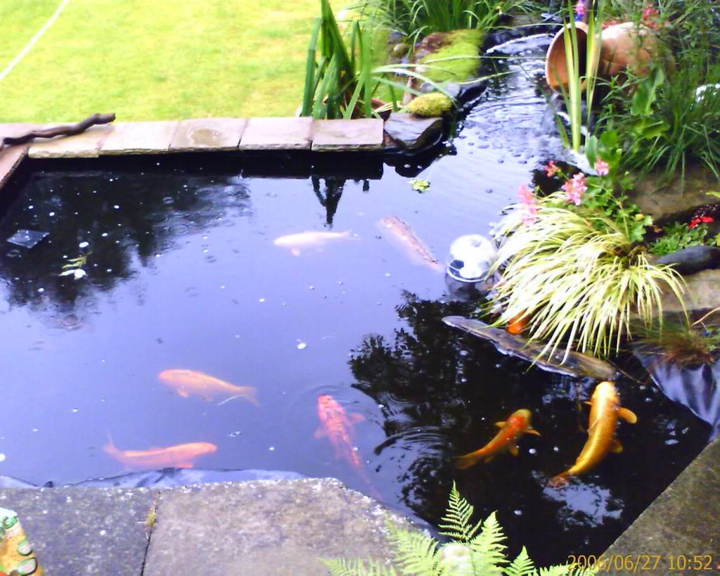 Green koi fish pond design ideas home trendy for Koi carp pond design