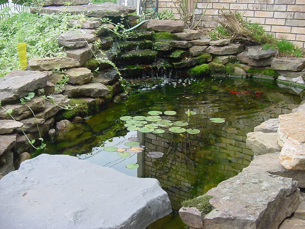 Koi fish pond design ideas for backyard home trendy for Outside fish pond ideas
