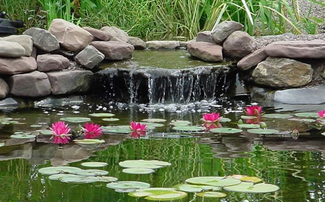 Koi fish pond design ideas for garden home trendy for Design of pond garden
