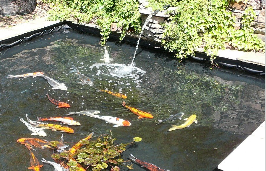Koi fish pond design ideas using fountain home trendy for Fish pond fountain design