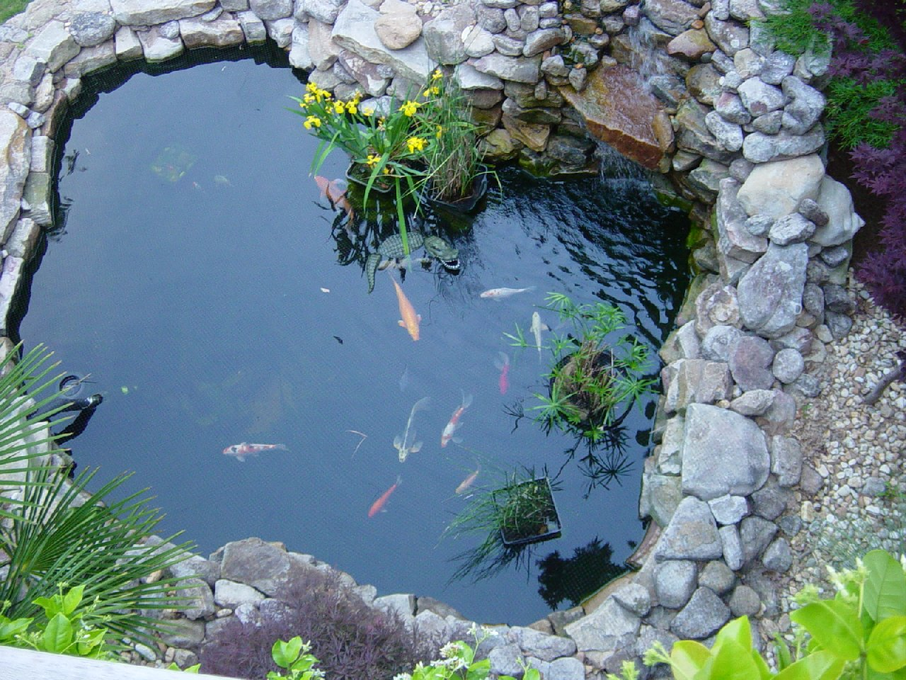 Luxury koi fish pond design ideas home trendy for Fish pond design
