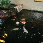 minimalist koi garden pond design ideas