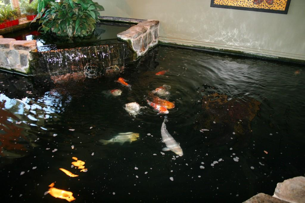minimalist koi garden pond design ideas home trendy
