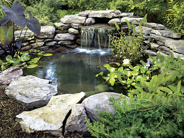 Natural koi fish pond design ideas home trendy for Natural koi pond