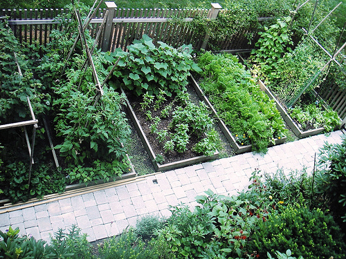 Raised Vegetable Garden Beds | Home Trendy