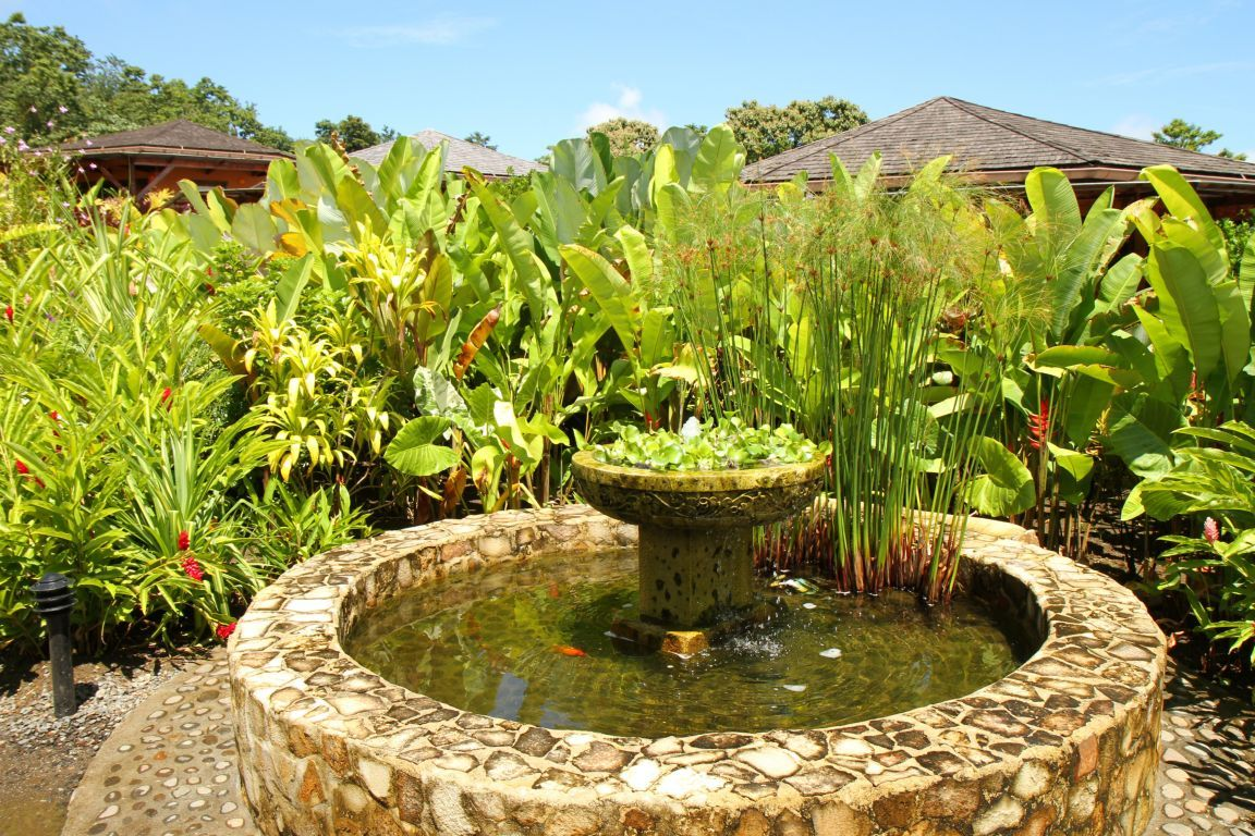 Koi fish pond design ideas home trendy for Types of pond design