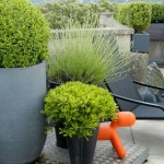small potted garden design pictures
