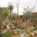 small rock garden design ideas