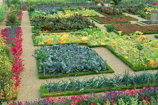 Urban Vegetable Garden Design Ideas | Home Trendy