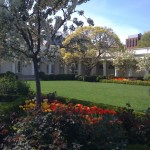 white house rose garden pictures
