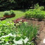 white house vegetable garden pictures